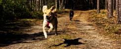 Jak nauczyć psa przywołania?